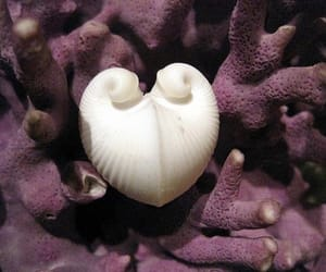 heart and shell image