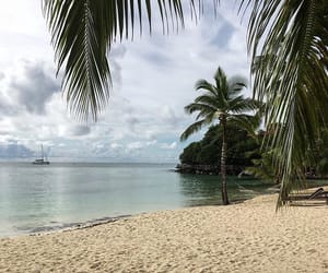 beach, blue, and palm trees image