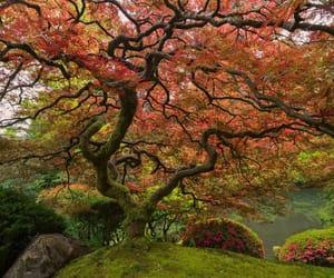 asia, nature, and pagan image