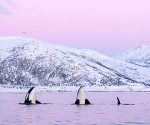 whale polenorth image