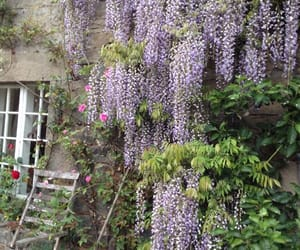 flowers and wisteria image