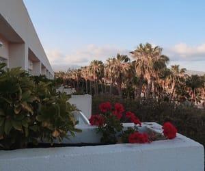 palmtrees, sky, and spain image