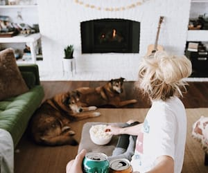 animal, blonde, and dogs image