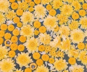 flowers, water, and yellow image