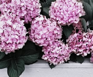 flowers, theme, and pink image
