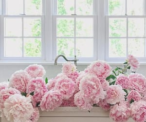 flowers, pink, and home image
