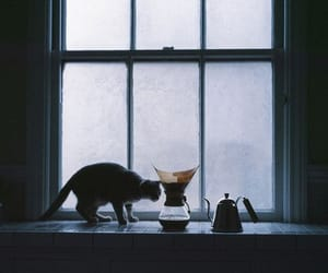 breakfast, cat, and coffee image