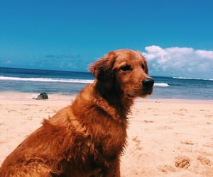 dog, vibes, and bright tropical image