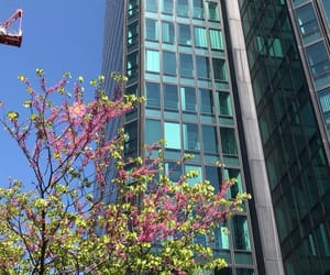 sky, blue, and cherry blossoms image