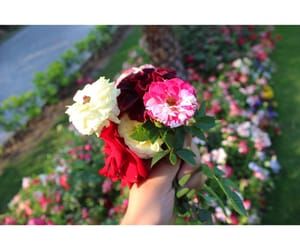 canon, flower, and quality image