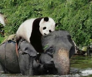 animals, elephants, and great image