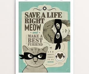 meow, pets, and adopt don't shop image