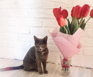 animal, flowers, and tulips image