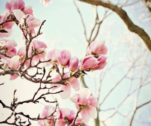 blossom, flowers, and magnolia image