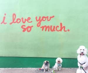 dogs, graffiti, and green image