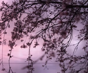 flowers, pink, and treee image