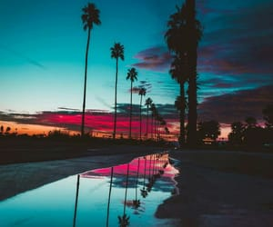 sunset; sky; palm trees image