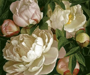 flowers, peonies, and variety image