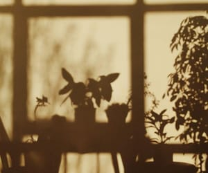 shadow, plants, and aesthetic image