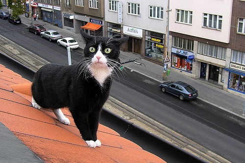 cat, roof, and trouble image