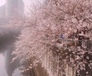 sakura, tokyo, and hanami image