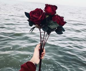 red, rose, and sea image
