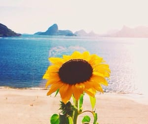 beach, mountains, and flower image
