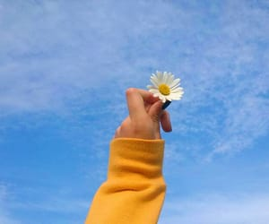 aesthetic, daisy, and nature image