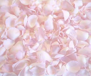 pink, flowers, and petals image