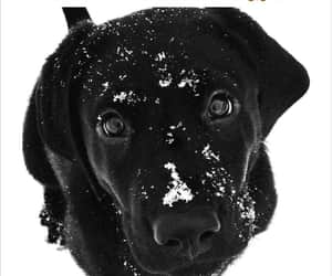 beautiful, black, and cutie image