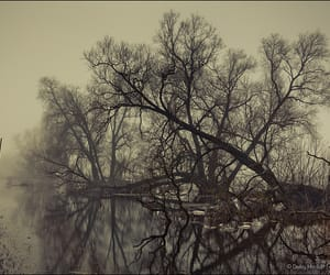 branch, flood, and flooded image