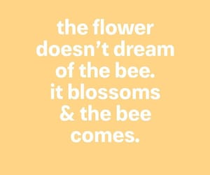 bee, blossom, and positive image