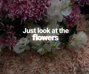 flowers, wallpaper, and twd image