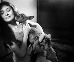 audrey hepburn and deer image