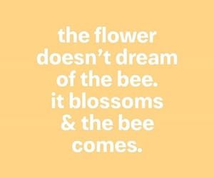 bee, blossoms, and Dream image