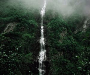dark, green, and tropical image