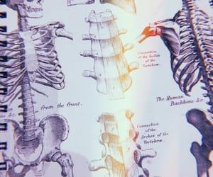 aesthetics, skeleton, and back bones image