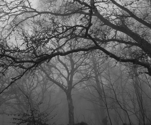 alone, black and white, and branches image