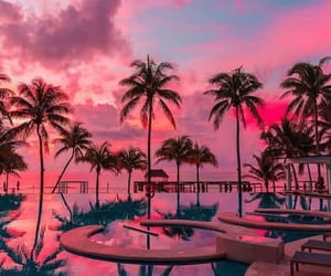 pink, nature, and palms image
