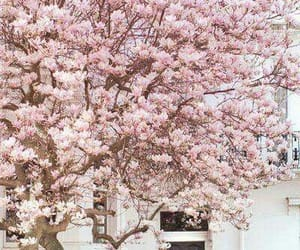 blossoms, tree, and pink image