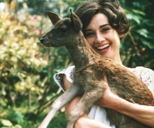 audrey hepburn, deer, and vintage image