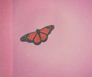 beautiful, butterfly, and vintagephoto image