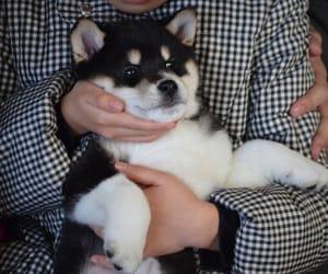 beautiful, dog, and inu image