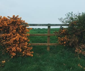 country side, flowers, and nature image