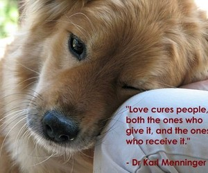 dogs, love, and quotation image