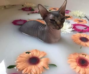 cat, flowers, and bath image
