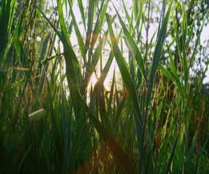 gif, vegetacion, and naturaleza image