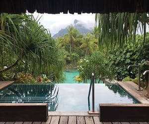 nature, palm, and pool image