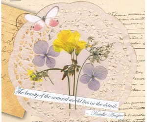 antique, pressed flowers, and spring image