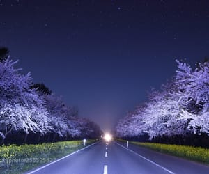 cherry blossom, pink, and road image